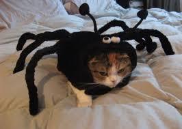 Kitten Halloween Costumes Pet 28 Halloween Costumes Cats Put Smile Face