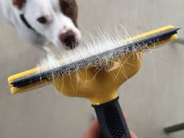 Do All Short Haired Dogs Shed by How To Reduce Shedding A Giveaway Lola The Pitty