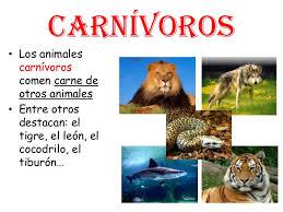 imagenes de animales carnivoros para imprimir características y diferencias entre los animales herbívoros y