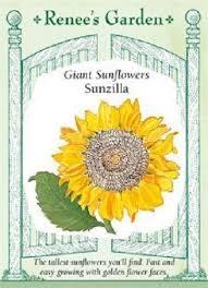11 best sunflower parts images on pinterest sunflowers anatomy