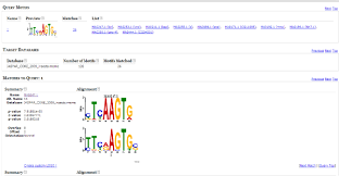 Meme Motif - in silico approach to map transcription factor binding motifs onto