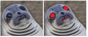 Awkward Seal Meme - the truth about philosoraptor adviceanimals
