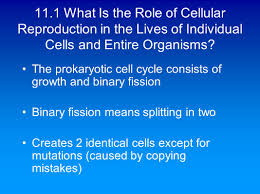 chapter 11 the continuity of life cellular reproduction ppt