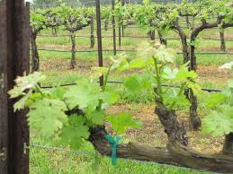 french broad vignerons a trip to yadkin valley