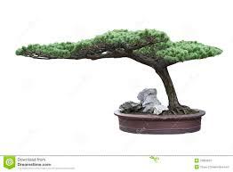 bonsai tree in a pot stock image image 24096371