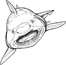 megalodon coloring pages funycoloring
