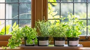 diy indoor herb garden start your own today