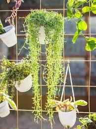 how to make a diy privacy plant wall hgtv