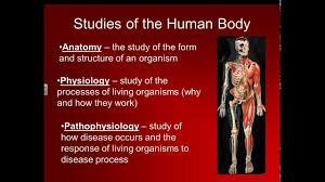 Anatomy Structure Of Human Body Basic Structure Of The Human Body Youtube