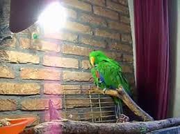 uv light for birds daylight l lightfresh youtube