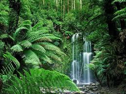 Plants In The Tropical Rain Forest - tropical rainforest green plants on the earth world visits