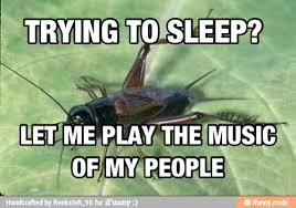 Crickets Chirping Meme - crickets chirping meme 28 images pics for gt crickets chirping