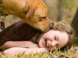 10 boxer dog facts 9 cool dog facts that explain why they u0027re man u0027s best friend goodnet