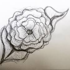 beautiful flower sketches rose pictures download image haammss