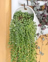 ceramic vaso flores basin ceramic flower pots planters hanging