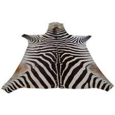 Genuine Zebra Rug Albino Zebra Rug 674 Liked On Polyvore Featuring Home Rugs