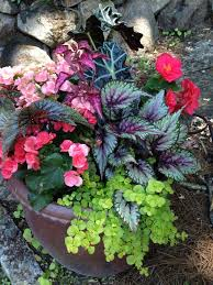 2776 best container gardening images on pinterest plants