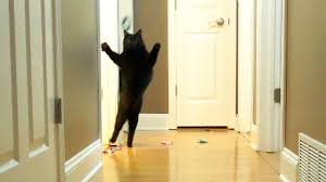 Funny Door Stops by Funny Crazy Cats Youtube