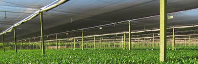 Shade Cloth Protecting Your Plants by Shade Structures Jpg