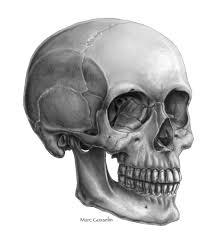 Halloween Skull Drawings Skull Three Quarter View By Marcgosselin Deviantart Com On