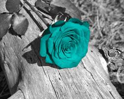 Teal Roses Black White Teal Wall Art Photography Rose Flower Floral