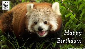 free birthday ecards birthday ecards from wwf free birthday ecards world wildlife fund