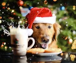 funny christmas dogs 31 hd wallpaper funnypicture org