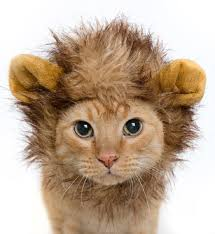 Pet Cat Halloween Costumes Lion Mane Cat Or Dog Lion Halloween Costume The Dog Paws U0026 The