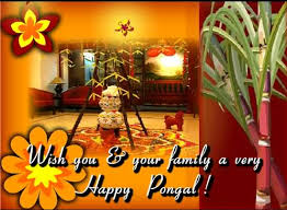 50 best pongal greeting pictures and images