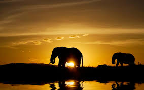 cool elephant wallpaper free desktop wallpapers 47 wide elephants hdq pictures p 79
