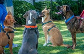 Creature Comforts Grooming Durham Nc Pet Boarding Grooming And Doggy Daycare Creature