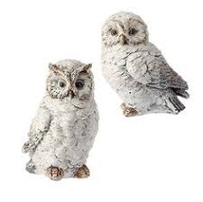 fluffy white feathered owls 7 price 35 95 http www