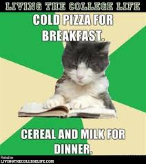 Hilarious College Memes - 130 best college memes images on pinterest funny stuff funny