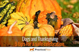 dogs and thanksgiving 9 tips for a safe celebration practical