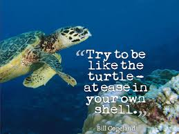 The Quot Be Like Bill - try to be like the turtle at ease in your own sh picture quote