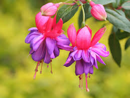 flowers beautiful flowers flowers wallpapers flower pictures