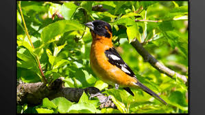 Washington Birds images Birds of washington state 2012 by mick thompson jpg