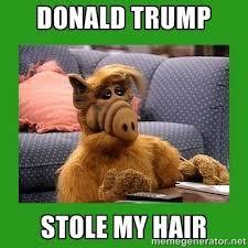 Alf Meme - donald trump stole my hair alf meme generator roslindale