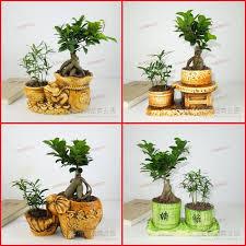plants for office desk indoor flowers plants radiation resistant bonnyclabber formaldehyde