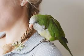 Parrot Decorations Home Helpful Tips For Naming Pet Parrots And Other Birds
