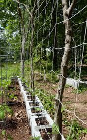 build a garden trellis trellis archives gardenoholic