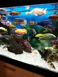 the most beautiful fresh water tank i ve seen aquariums