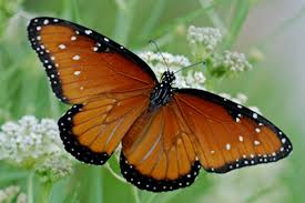 butterfly 2018 and scientific articles on live science