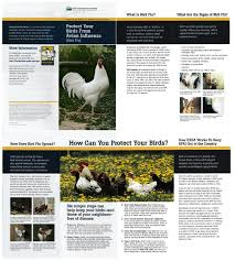 files the atlanta backyard poultry meetup group atlanta ga
