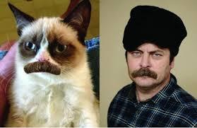 Cat Beard Meme - the best of the grumpy cat meme viralizeit