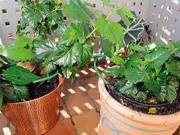 topfpflanzen balkon royal gardineer pflanzen bewässerungs system für balkon terrasse