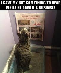 Newspaper Cat Meme - funny pet photos on twitter funny cat litter newspaper meme