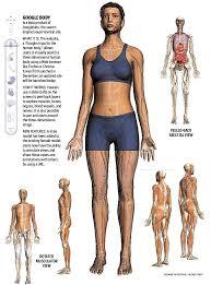 Google Body Anatomy Google Body Boston Com