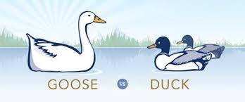 Goose Or Duck Down Duvet Hungarian Goose Down Vs Duck Down