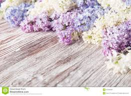 wood flowers lilac flowers bouquet wooden plank background stock photos